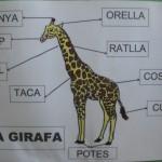 PARTS DE LA GIRAFA