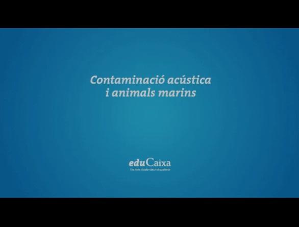 CONTAMINACIO ACUSTICA I ANIMALS MARINS