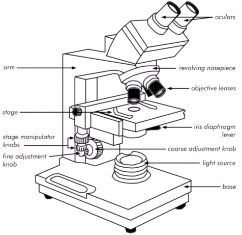 binocular microscope parts and functions pdf