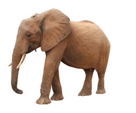 elefant2