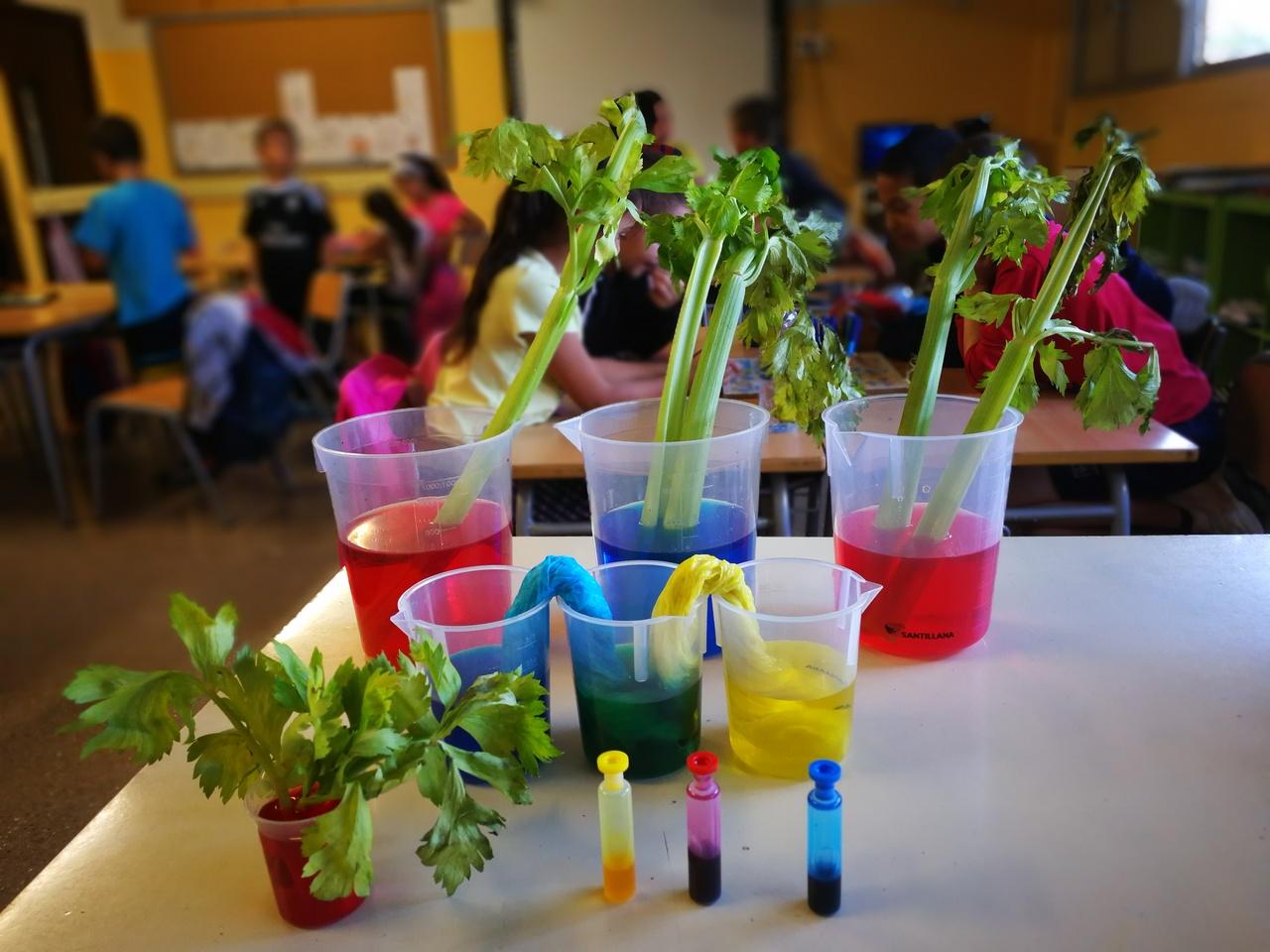 Experiment plantes