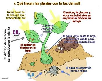 Fases de la fotosintesis wikipedia 29