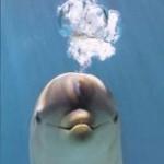 delfin-burbujas1