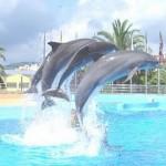 dofins-saltant