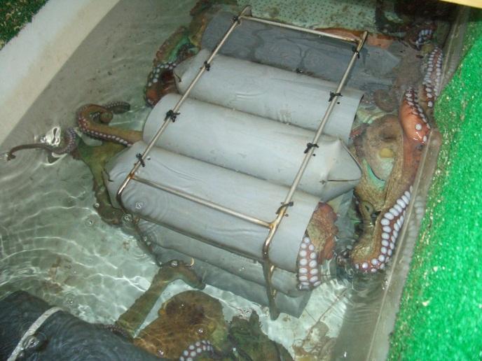 oceanografosblog.com