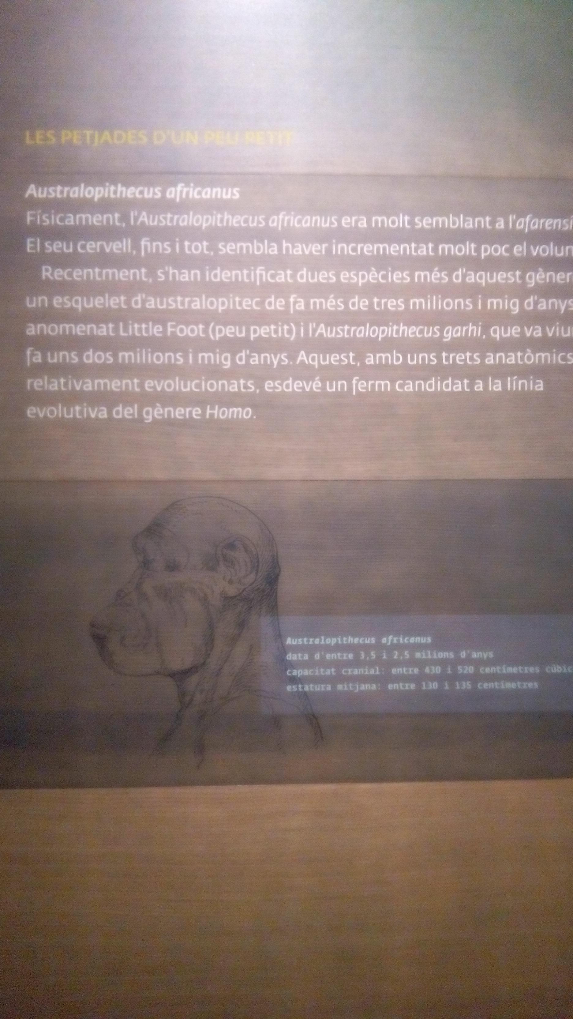 Visita museu de Lleida_catalogació2