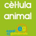 Cèl·lula animal