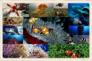 Mundo Marino by www.PicaySabe.com-1